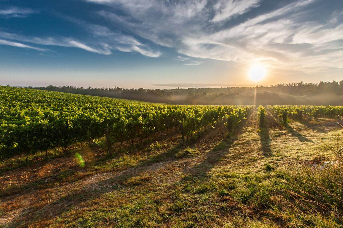 taste of Bordeaux - 7-Night Cruise from Bordeaux to Bordeaux