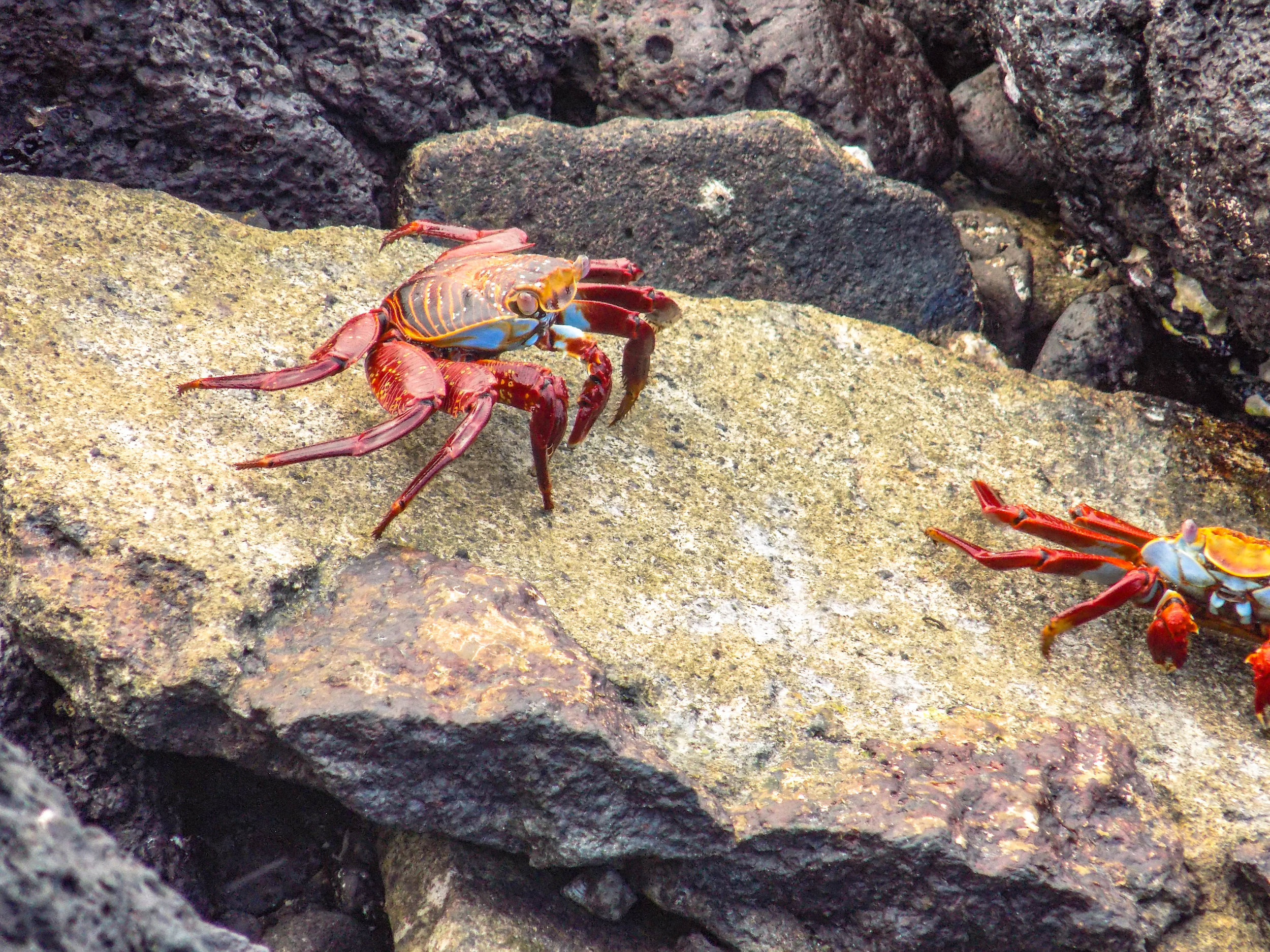 Ecuador and Galapagos Wildlife (6 of 15).jpg