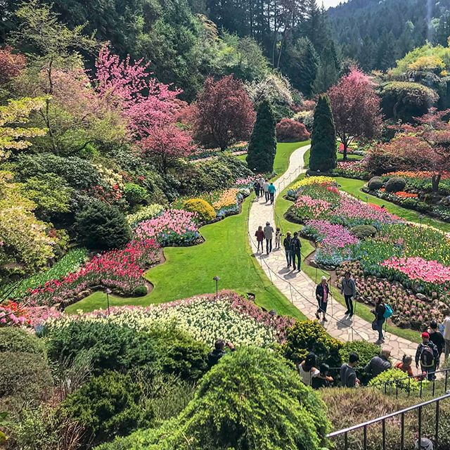 The Butchard Gardens are mesmerizing 😍😍 . . . #victoria #canada #britishcolumbia #abmtravelbug #travelphoto #naturephoto #garden #butchardgardens #wanderlust #exploremore #beautifuldestinations #instatravel #instapassport #passionpassport