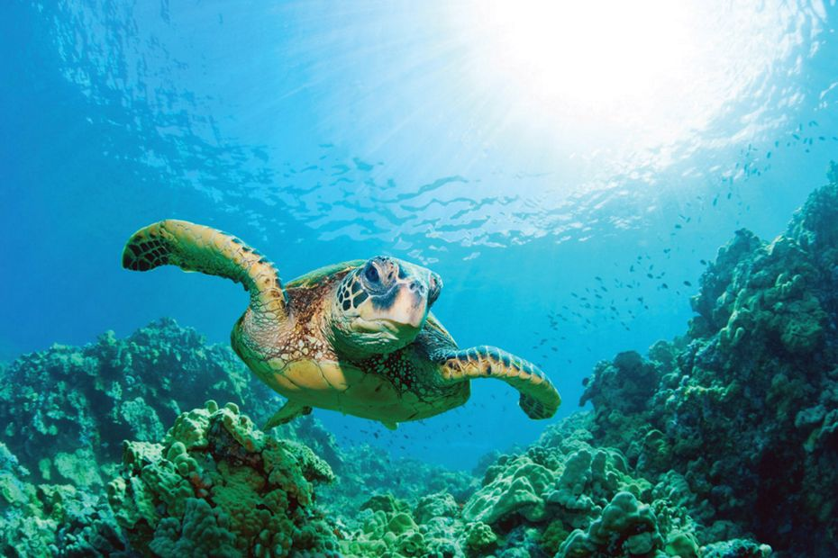 4-punta-vicente-roca-silversea-galapagos-cruise-sea-turtle.jpg