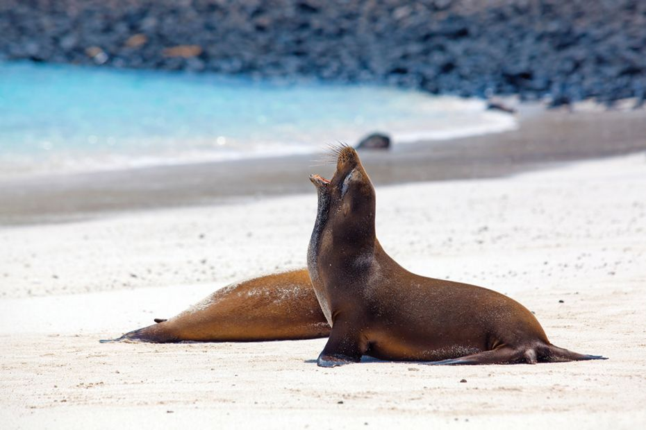 8-post-office-silversea-galapagos-cruise-sea-lions1.jpg
