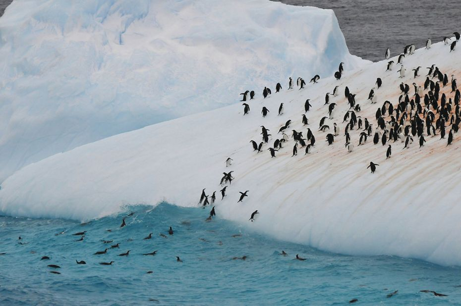 silversea-antarctica-cruise-colony-penguins-2.jpg
