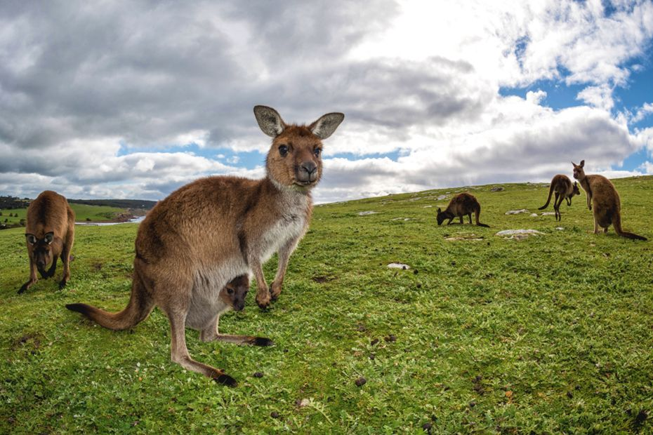 silversea-cruises-grand-voyage-burnie-tasmania-australia.jpg