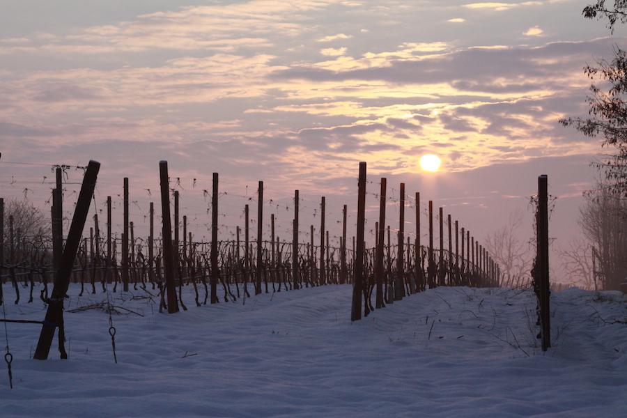IMG_1411.vigneto neve al tramontoJPG 900x600.jpg