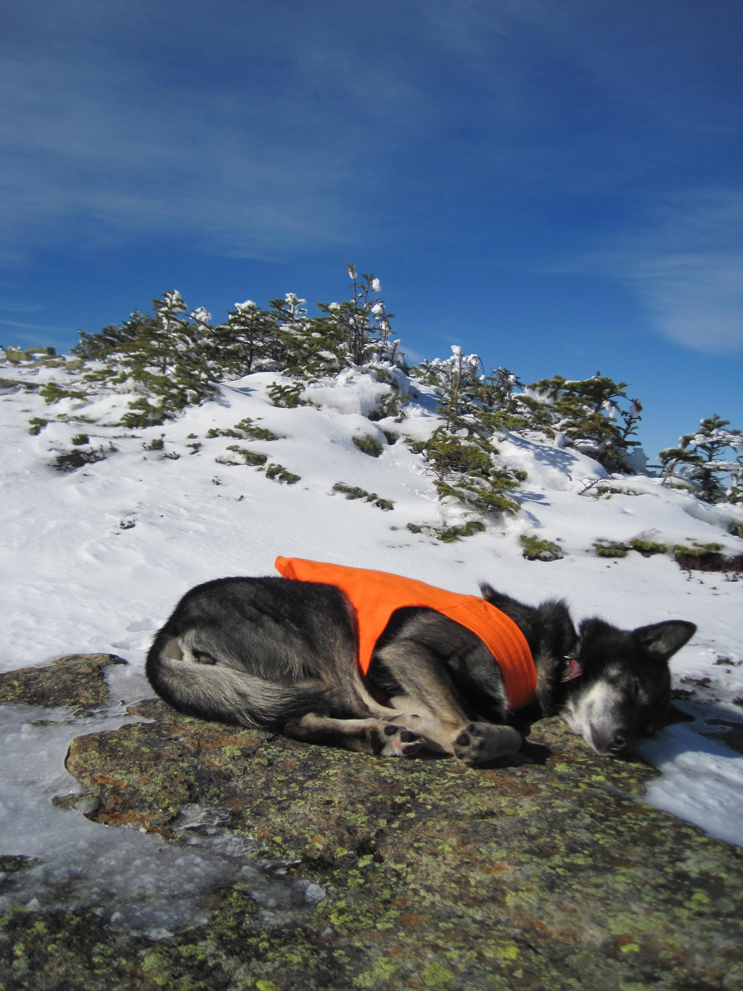 On the slopes of Mt Bond, November 2010