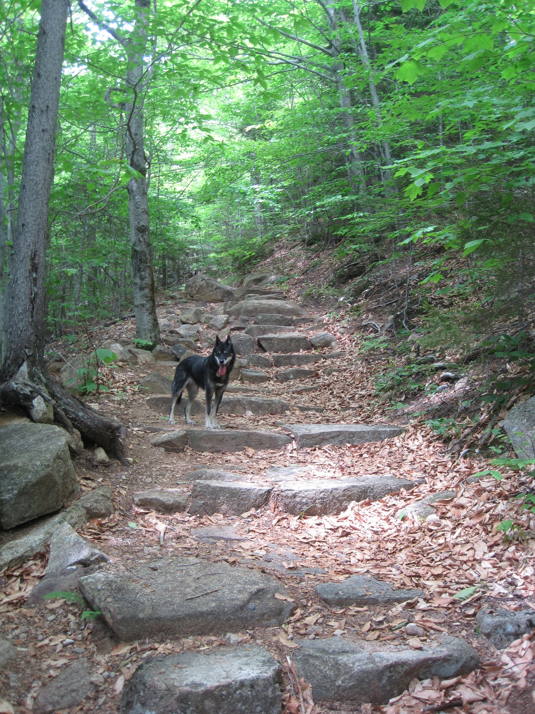 Taking on the Piper Trail, on her last big construction project at Peacook Shelter, 2012