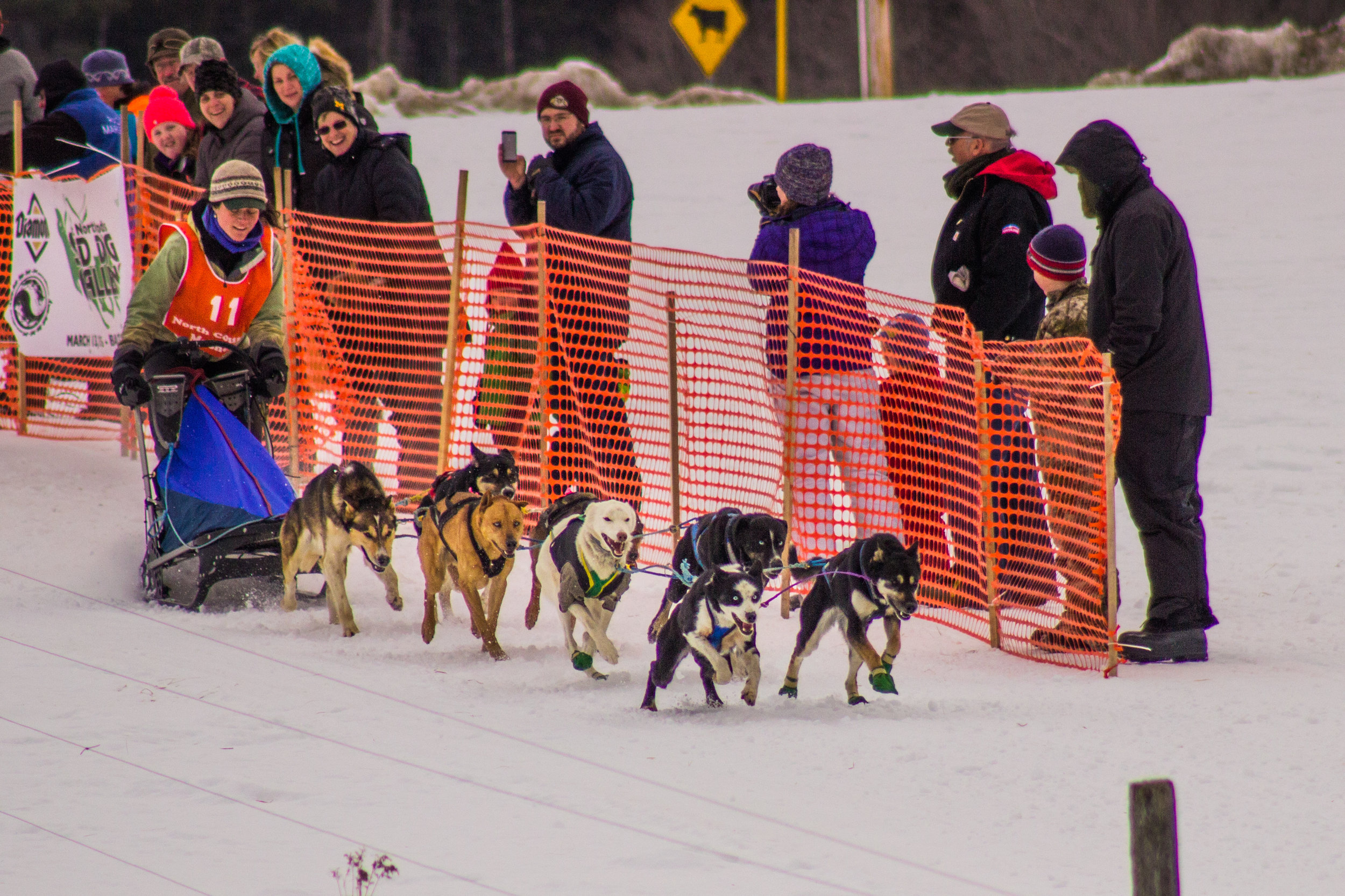Wembley and Grenade in lead, Great Northwoods Sleddog Challenge 2015