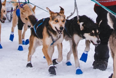 Rocky with his running-buddy Inferno, leaving the Sawbill checkpoint at the Beargrease.