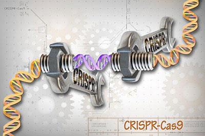 Molecular Biology Services
