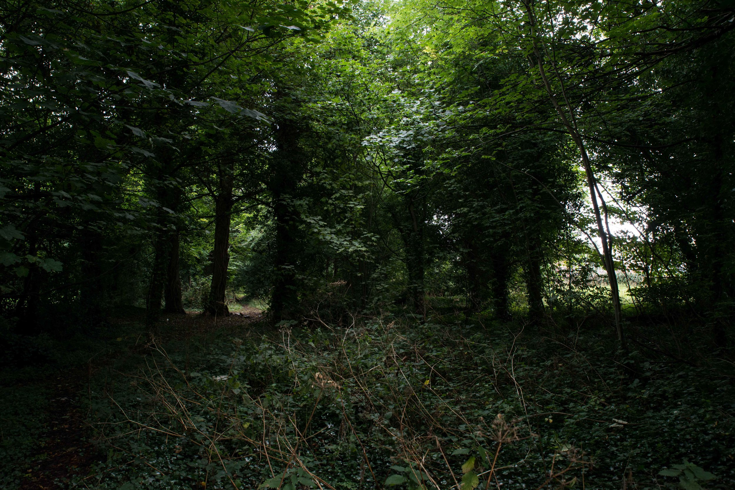 Forest Chasing (3 of 14).jpg