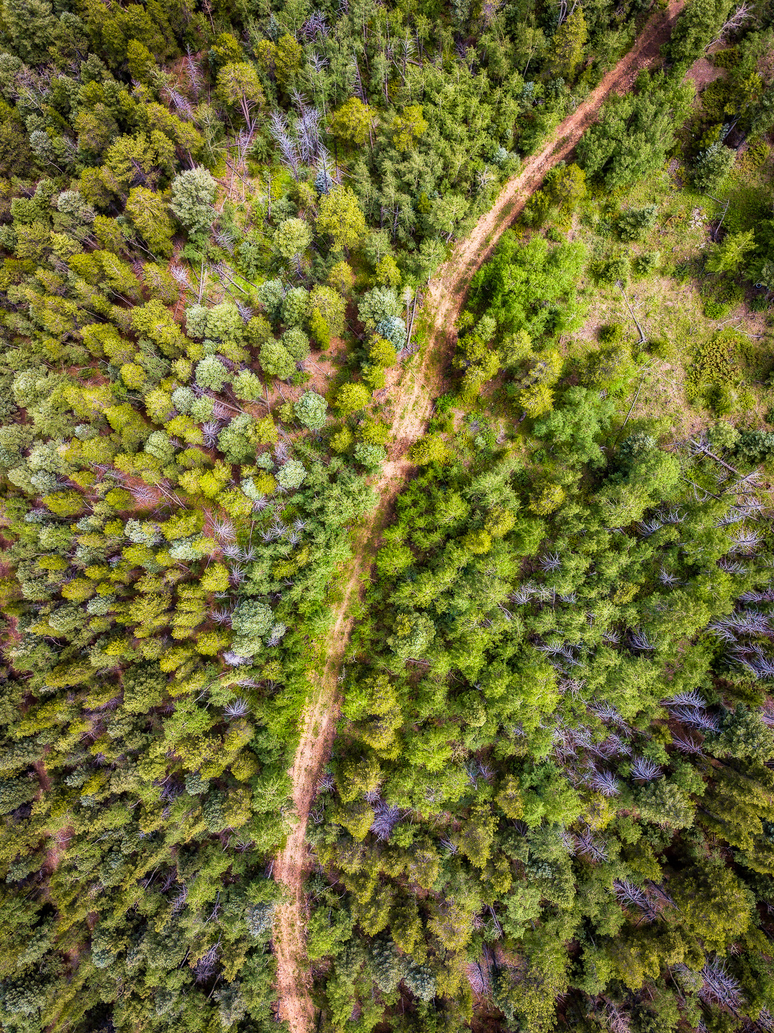 AerialCO.jpg