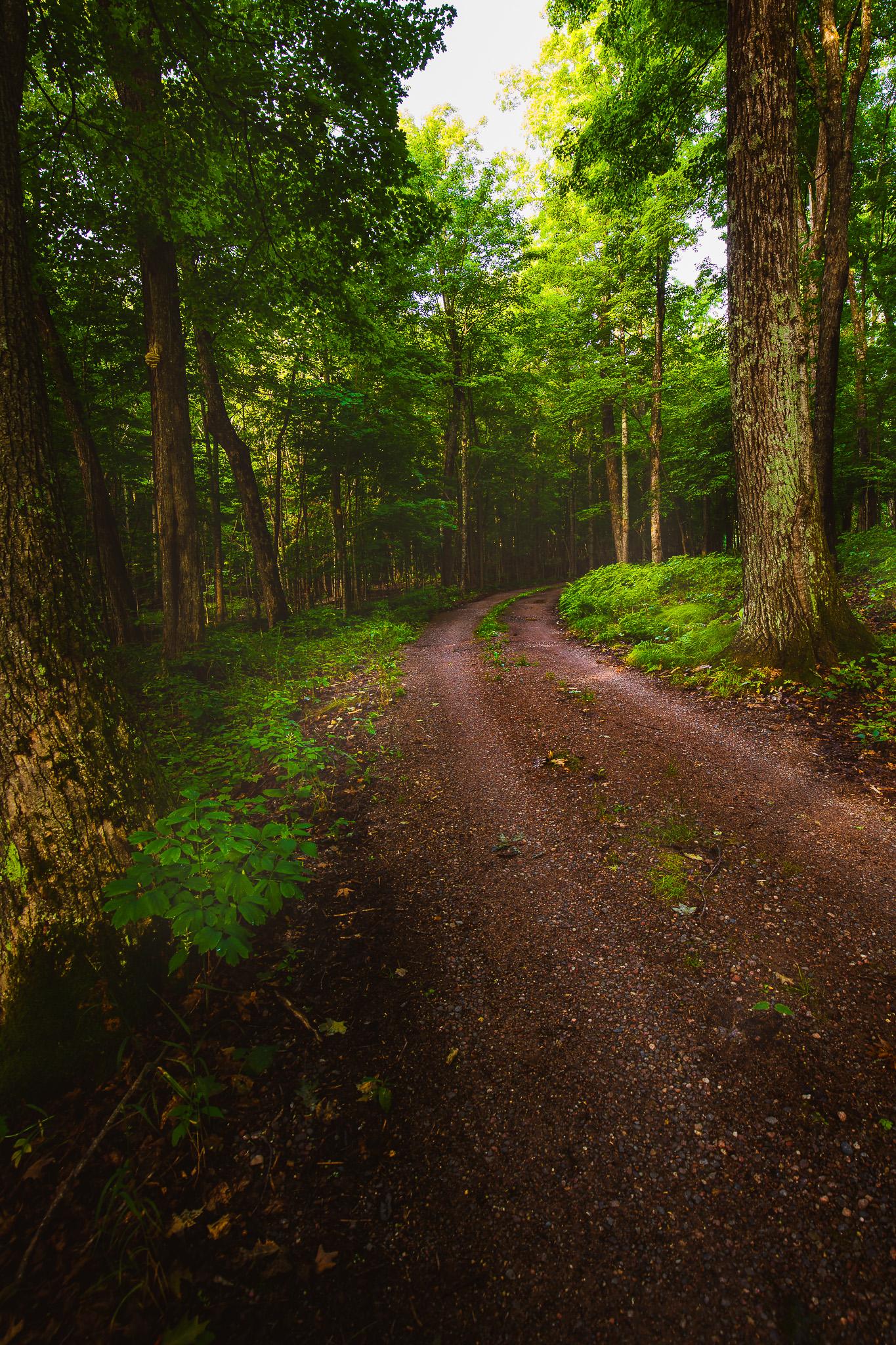 WoodlandRoad.jpg