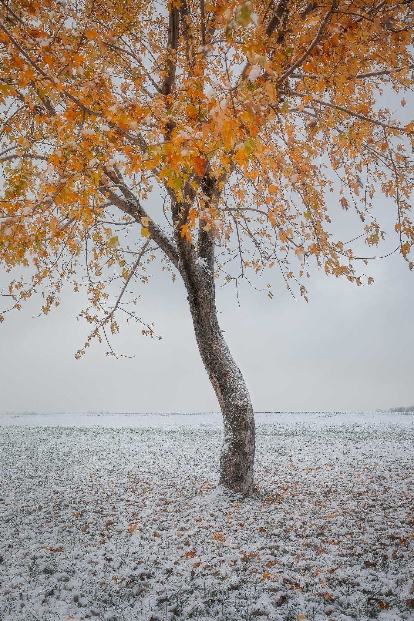 SnowyOrange.jpg