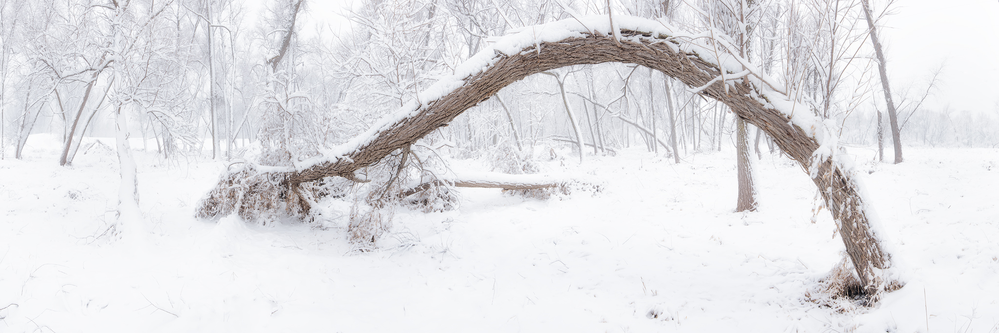 A interesting tree arch in Lake Manawa State Park - 6 frame pano - 24mm - ISO 100 - f/16 - 1/6 sec