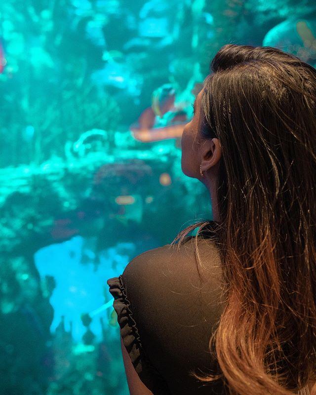 Take me to a place so magical that there are fish of every colour and shape imaginable. @burjalarab @burjalarab @mydubai  @visit.dubai  #dubaifoodfest #ramadanindubai  #mydubai