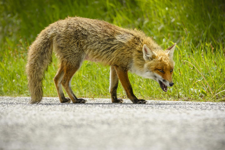 fox-stock.jpg