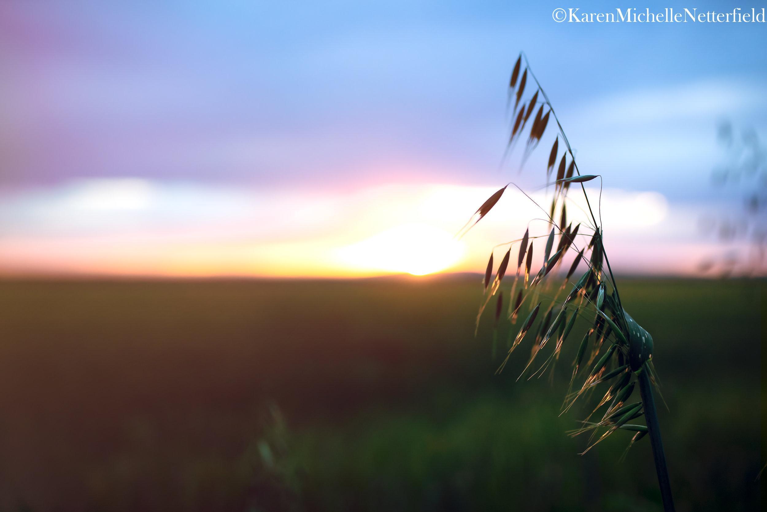 WheatIdahoII©KarenMichelleNetterfield2019.jpg