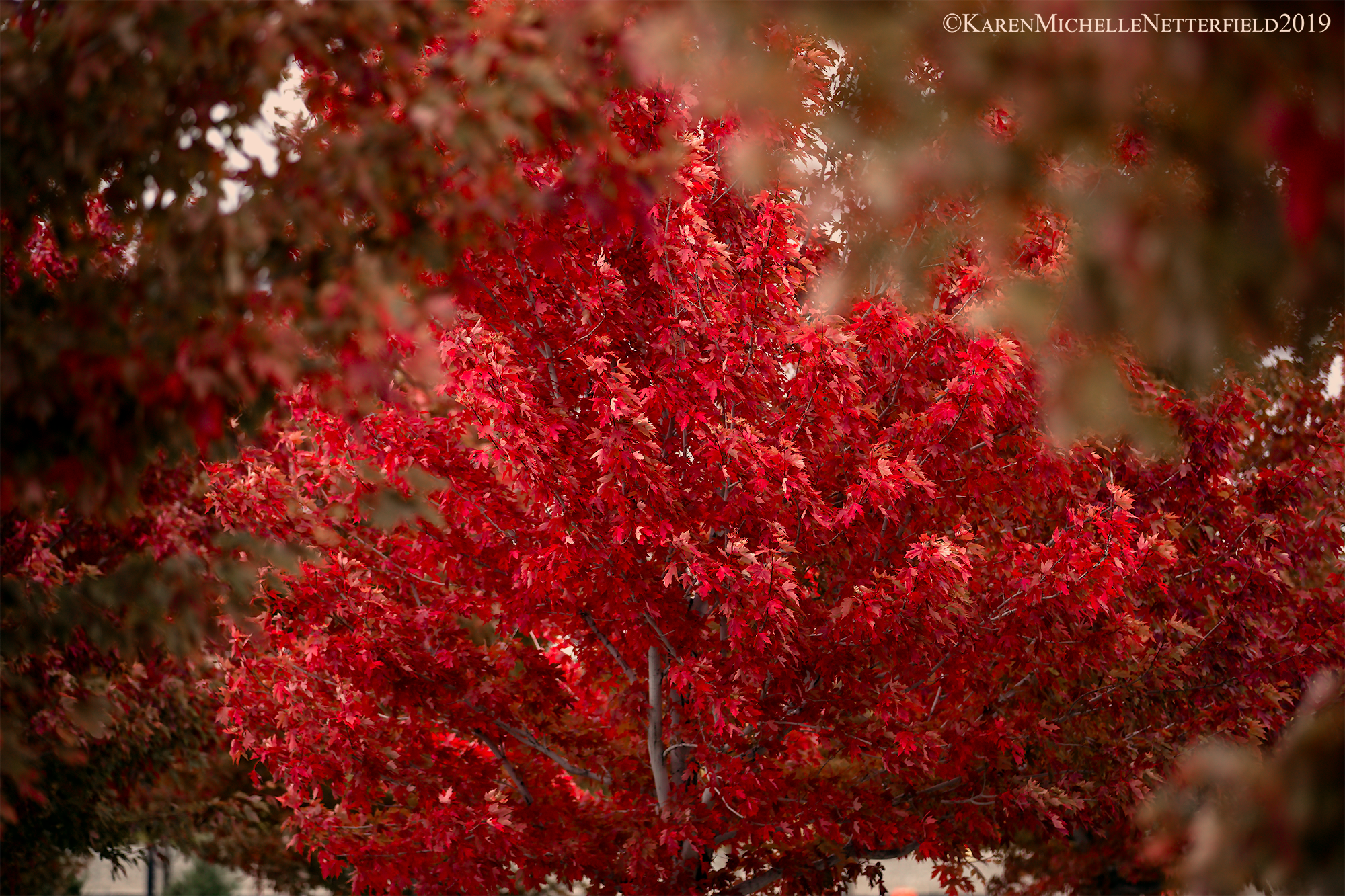 AutumnRed©KarenMichelleNetterfield2019-724-Edit.png