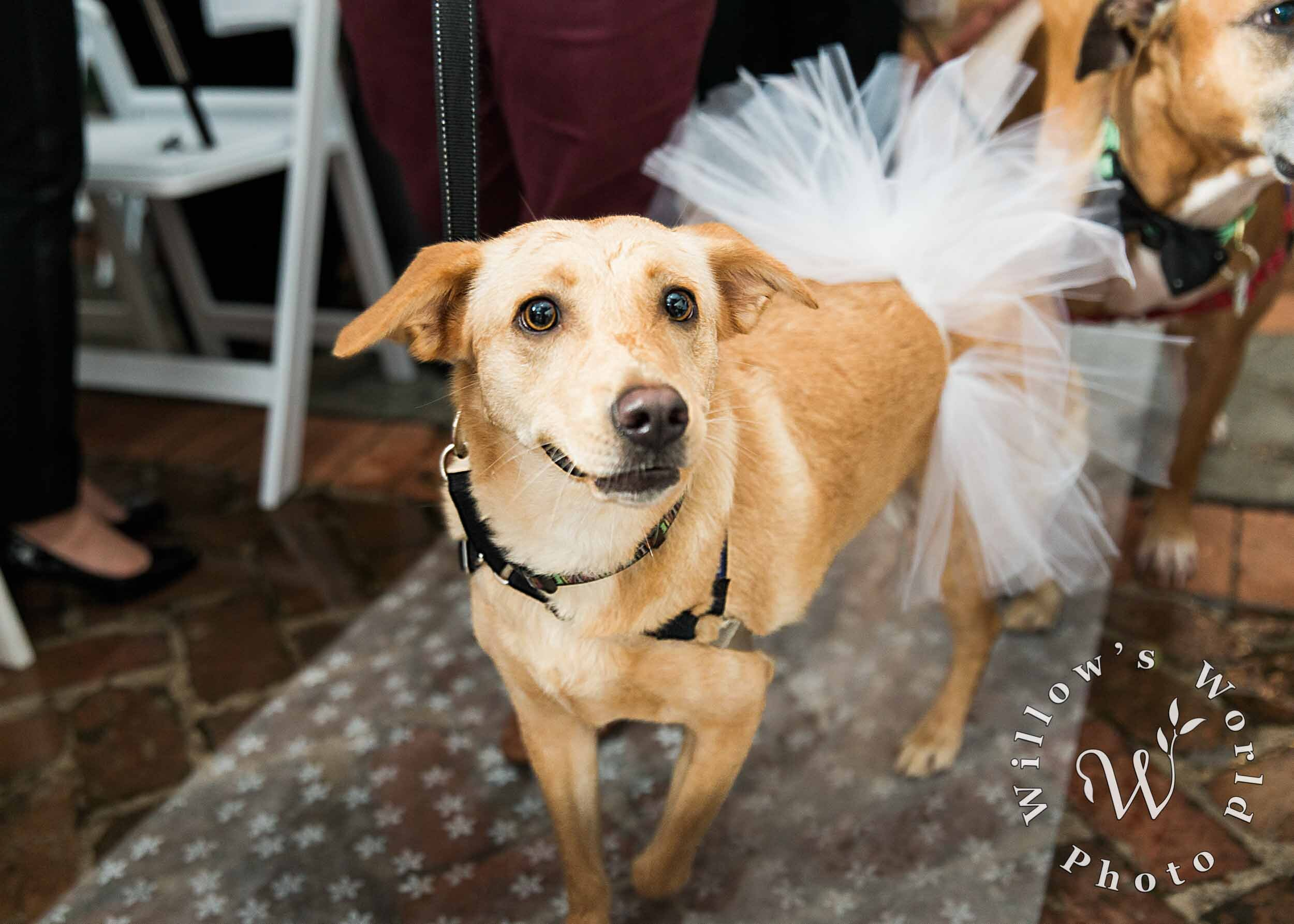26-Degas-House-New-Orleans-Wedding-Ceremony-Dog-Willows-World-Photo.jpg