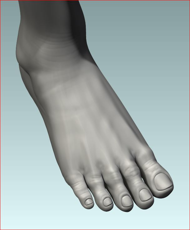_FinalHP_Female_Foot.JPG