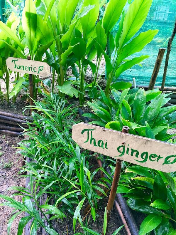 ahansen-thailand1006.jpg