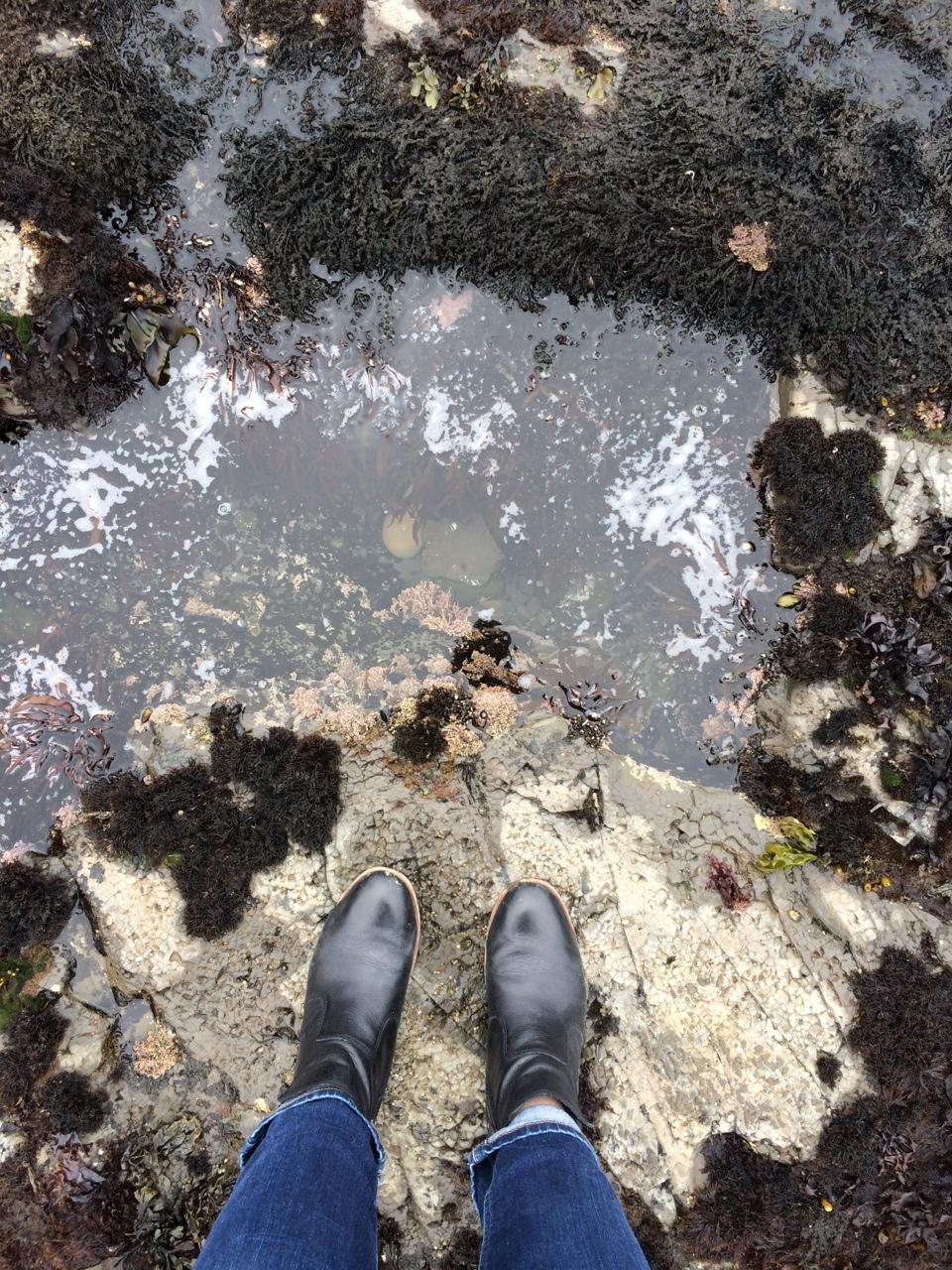 Tidal pools in Moss Beach