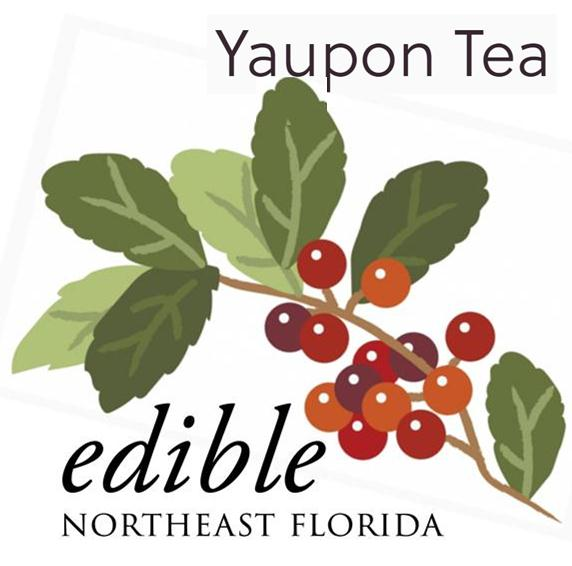 Yaupon - The only Tea with American Roots