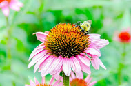 - Click here for Make Your Yard Safe for Bees document.Click here for Buying Bee-Safe Plants in West Metro Denver
