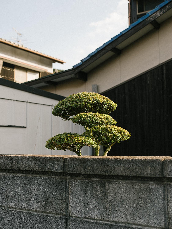 japan16-5530.jpg