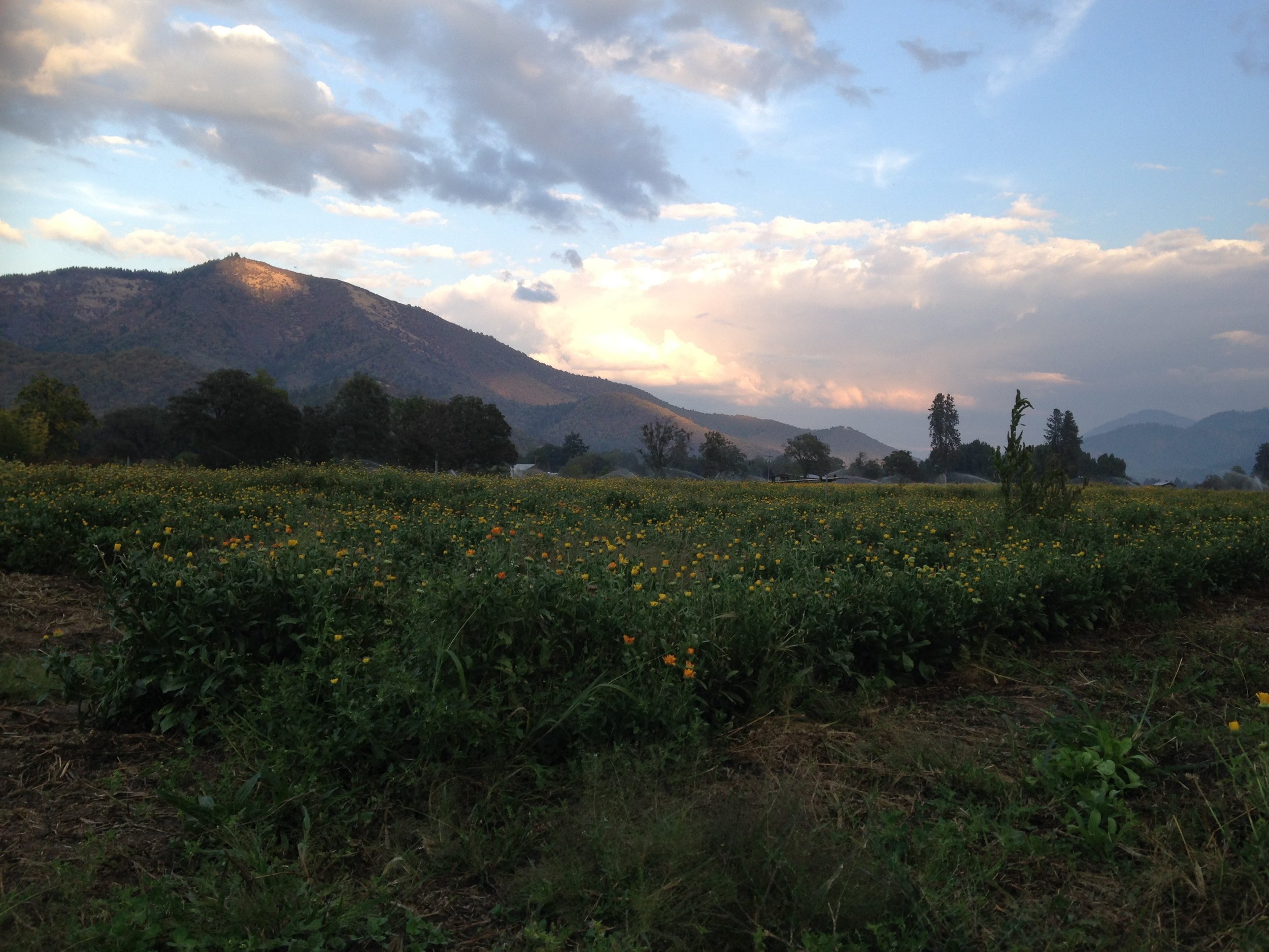 OSHALA FARMS