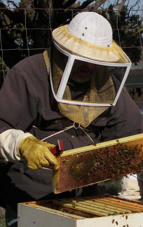 Worker Bee Honey