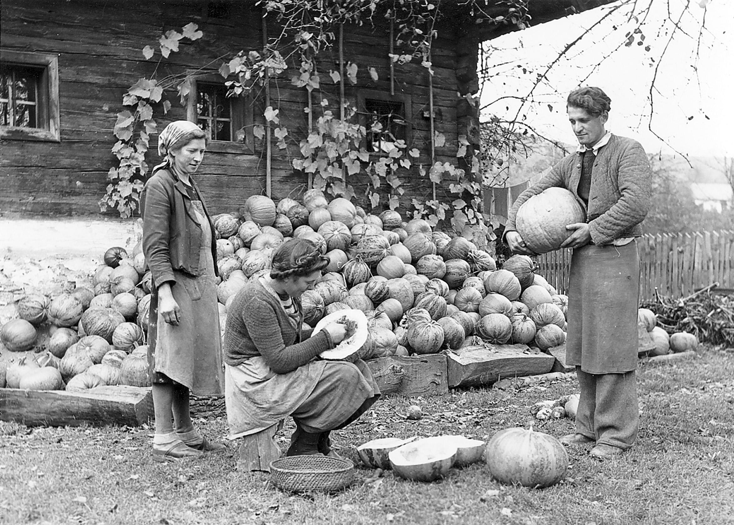 Schwarzes Gold - steirische Bauern beim traditionellen Kürbiskernputzen