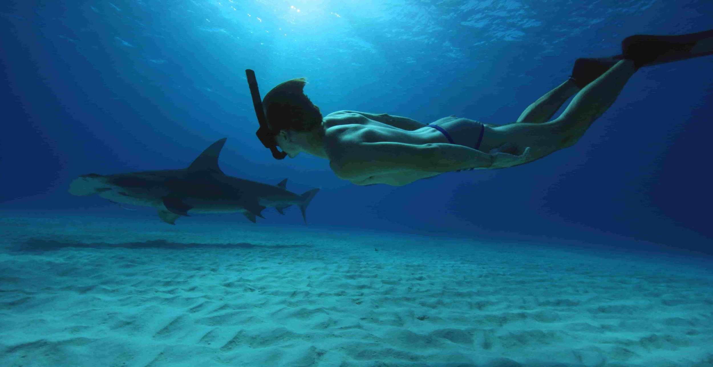 Sharkwater Extinction by Rob Stewart