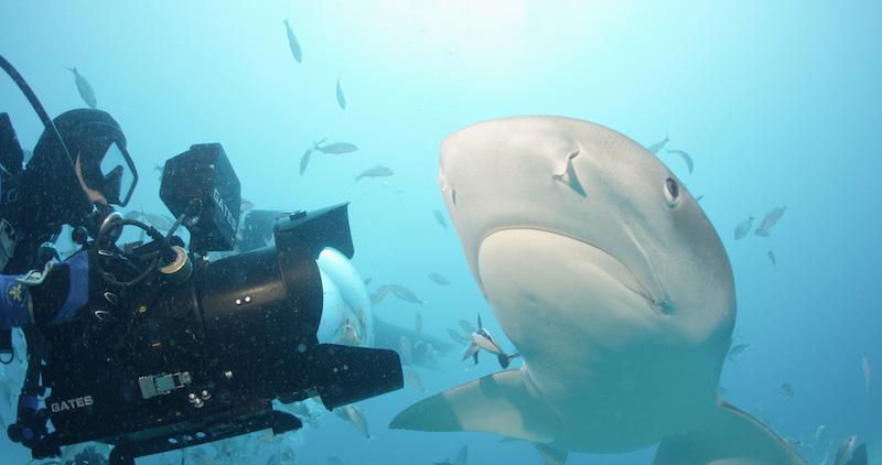 SharkwaterExtinction_RobStewart_FilmsLemonShark.jpg