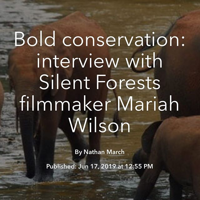 """The regret expressed by Jean Paul represents an often-unheard perspective, and his anti-poaching ""support"" group highlights one unique solution to the problem of poaching – rehabilitating former poachers by offering them alternate forms of income, and getting them involved on the anti-poaching side with financial incentives."" Read the full interview with indie filmmaker Mariah Wilson on the Follow Magazine blog."