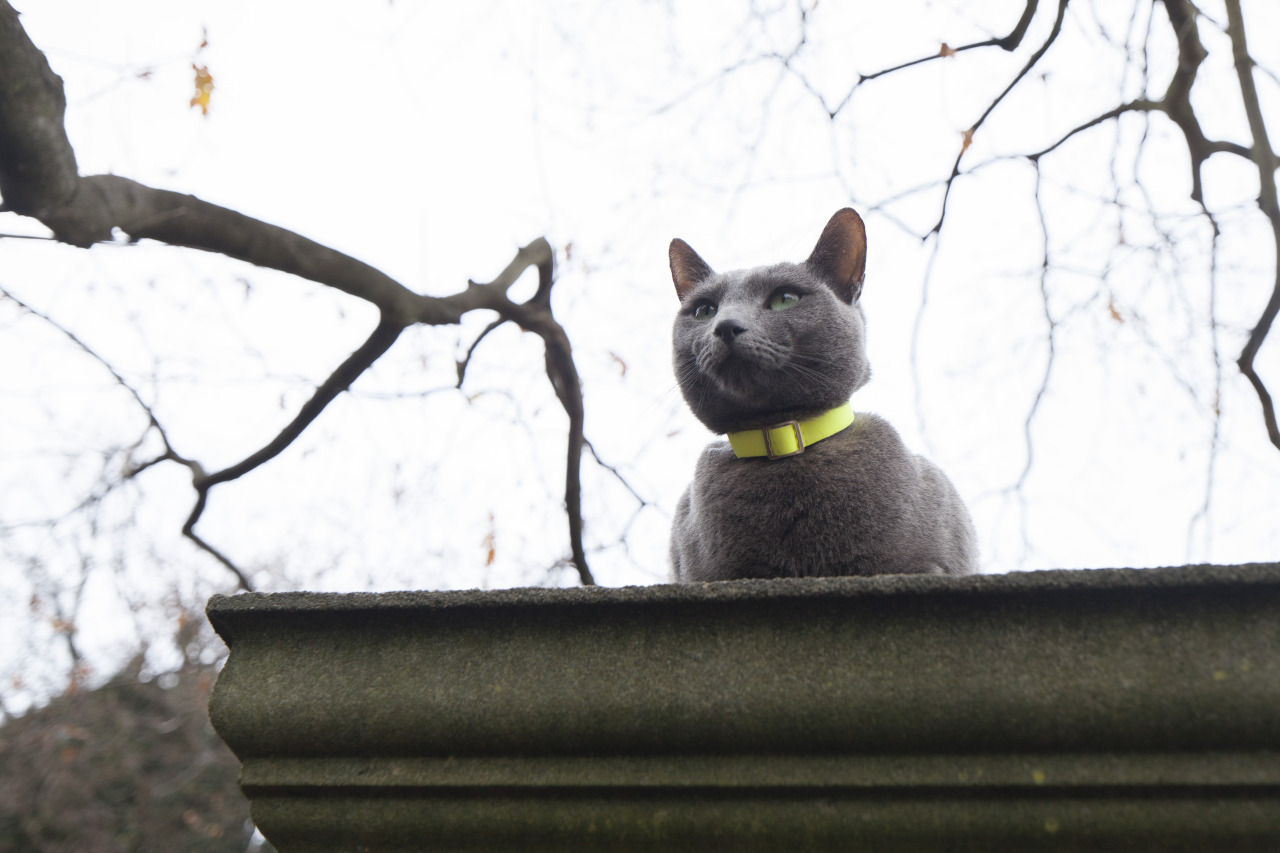 Posh Hampstead Cat.