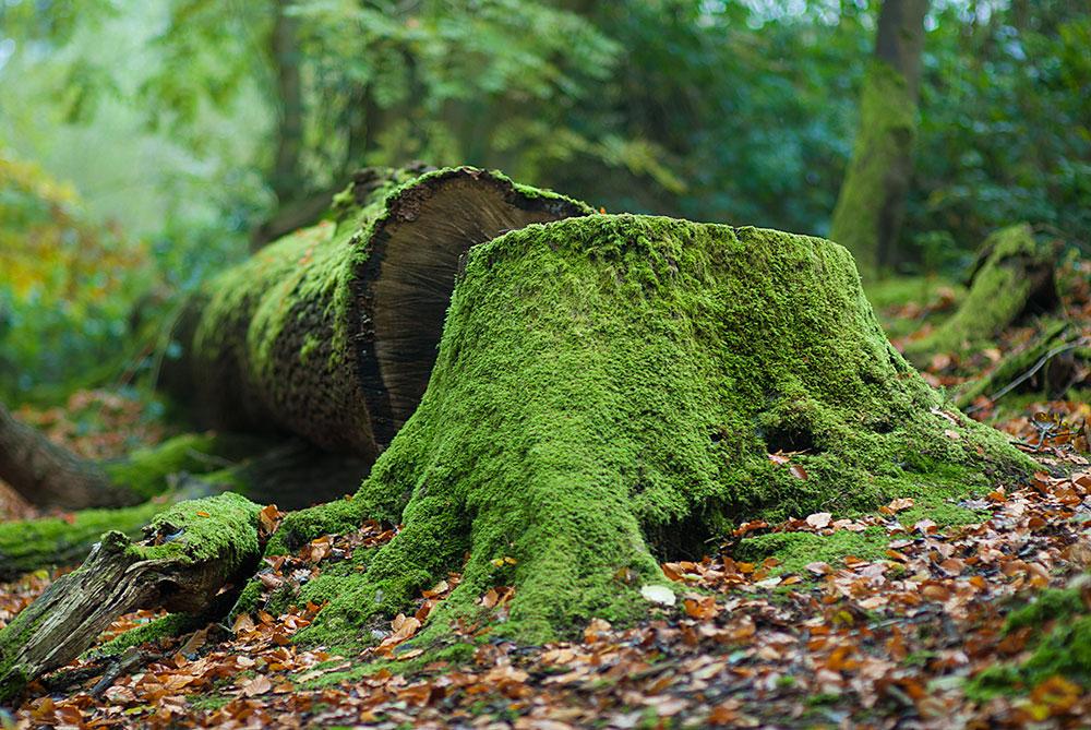 tree-stumped.jpg