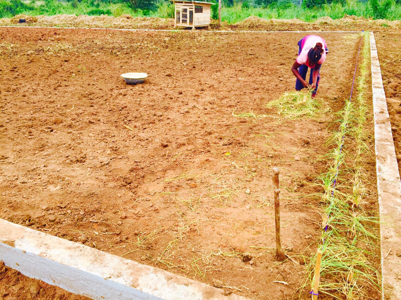 10. Planting the lawn - Sept 2015..jpg
