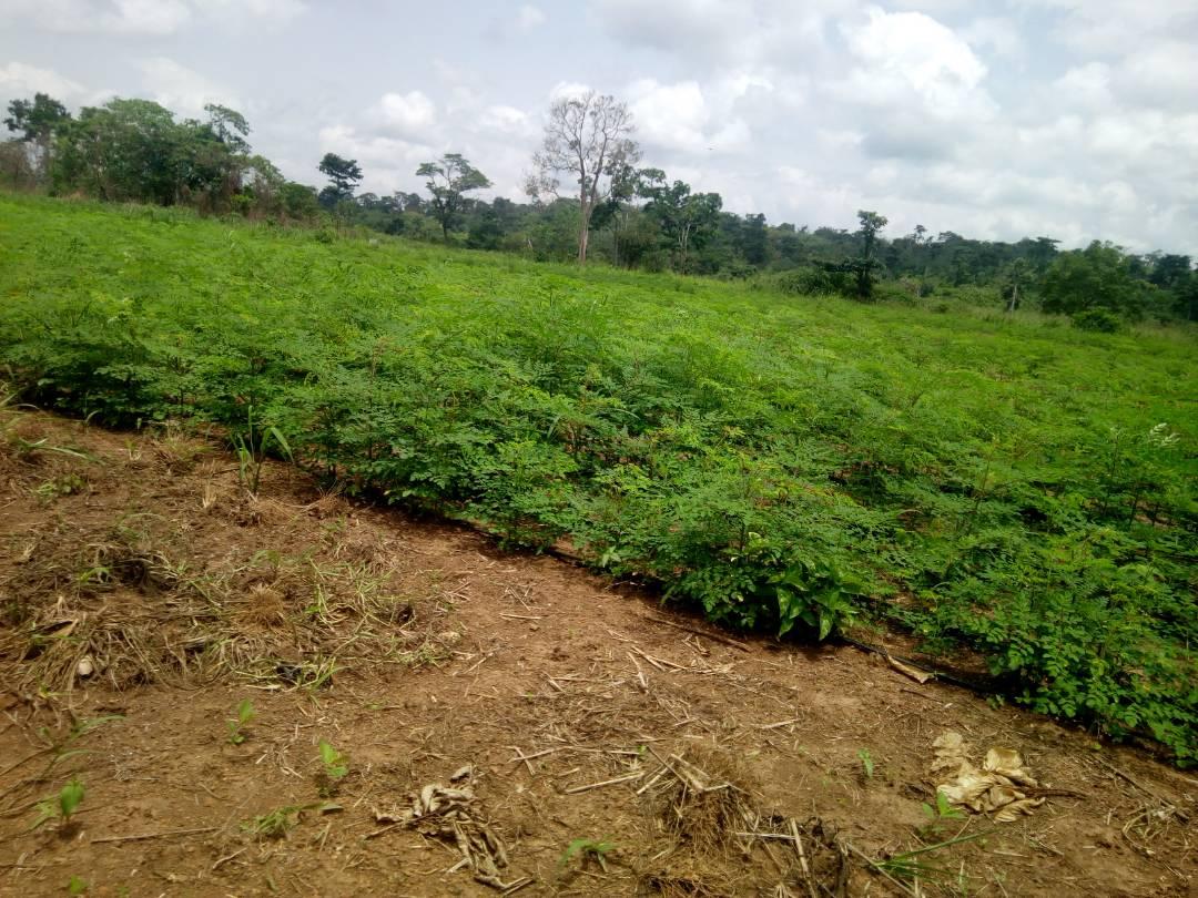 Irrigated farm 2.jpg