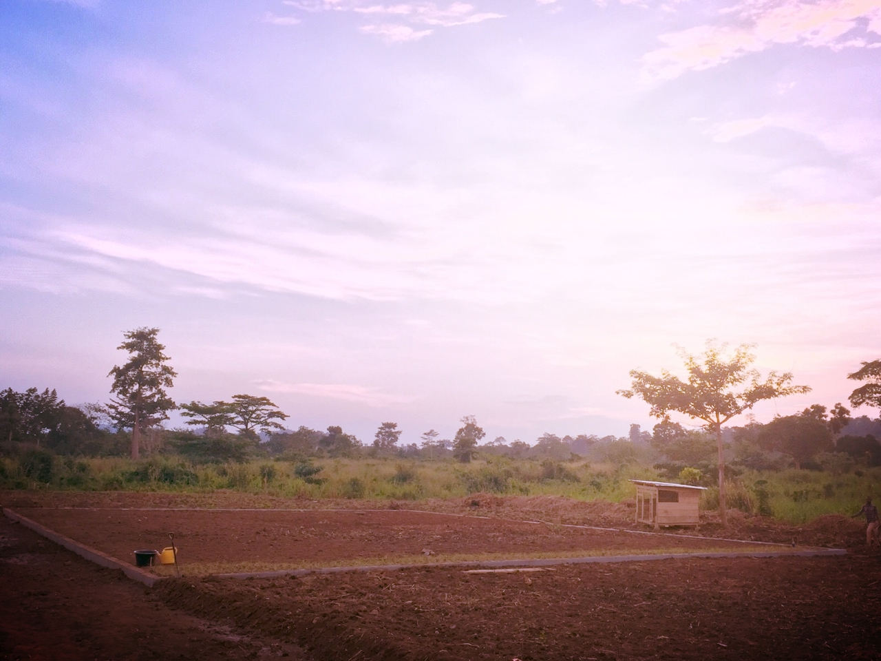 Sunset over garden 2.jpeg