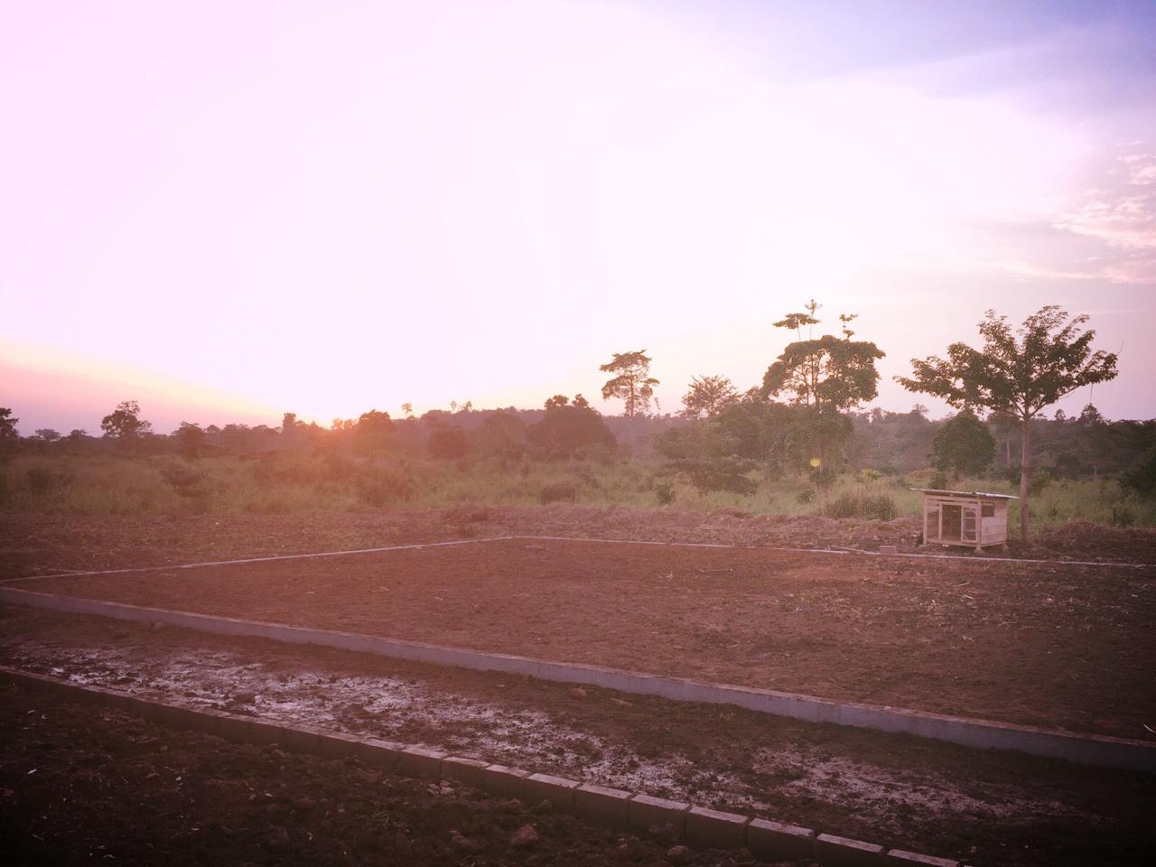 Sunset over garden.jpeg