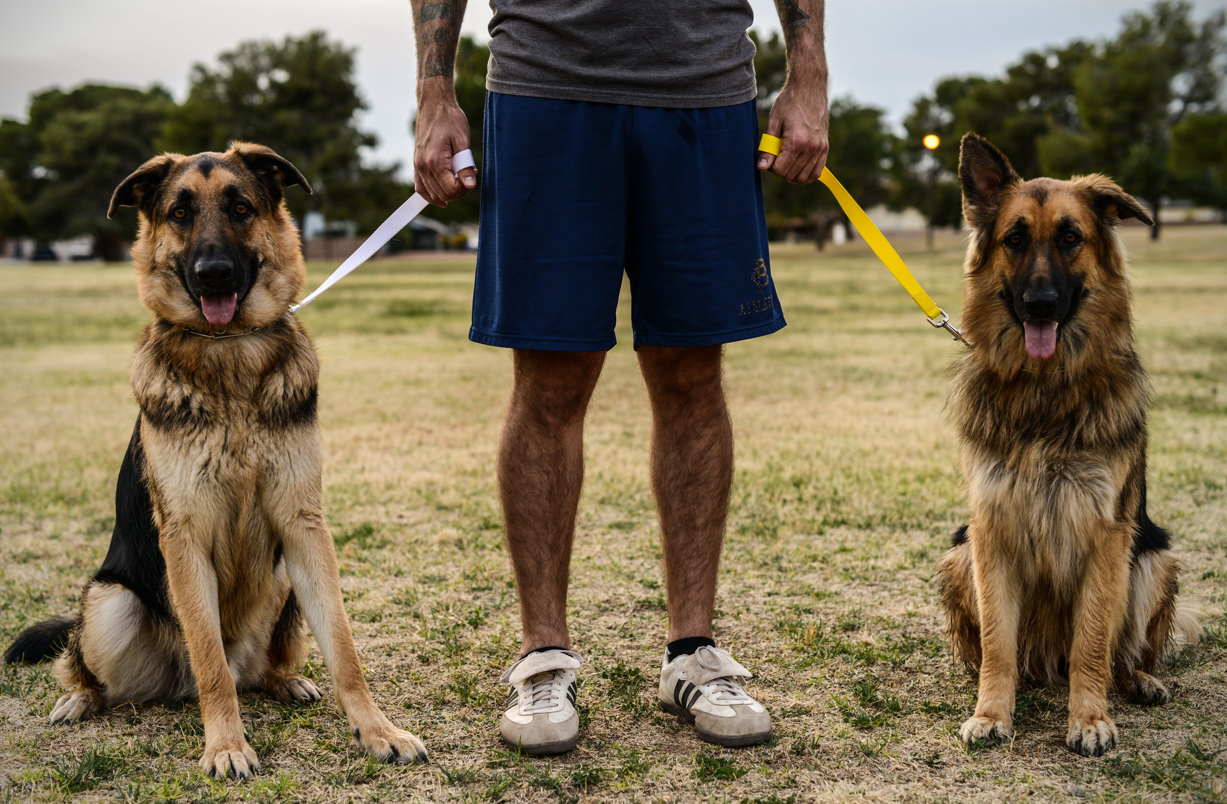 Trip Less Trainer makes it easy to control even the biggest, most challenging dogs.