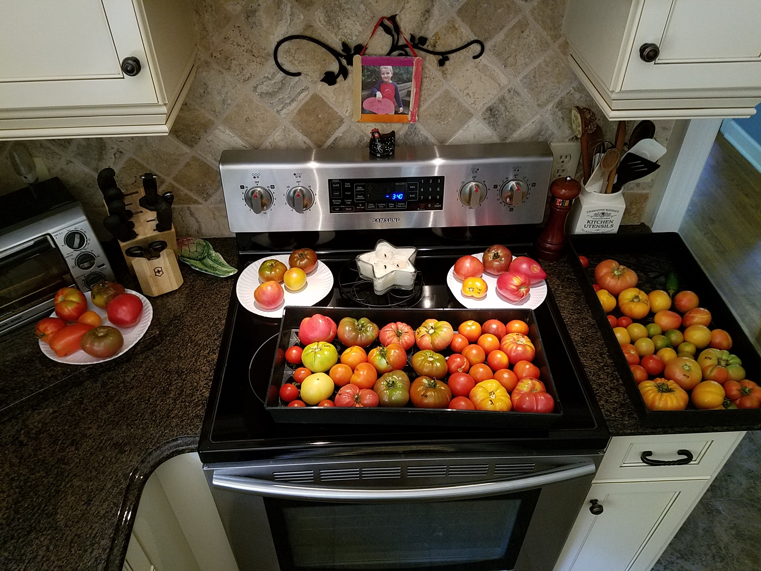 Tomato Harvest July 25 2016.jpg