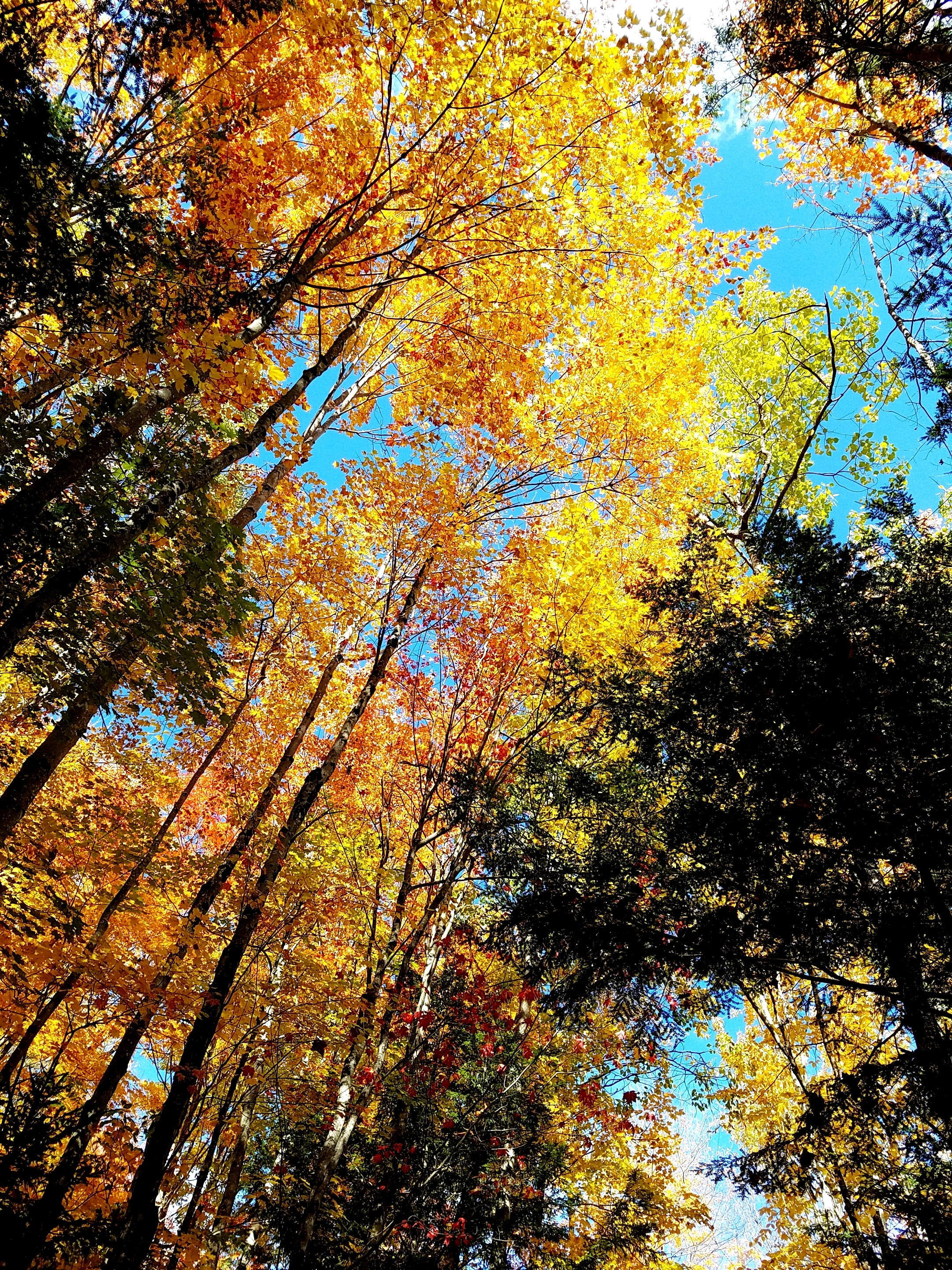 Lincoln Woods trail looking up Oct 2016.jpg