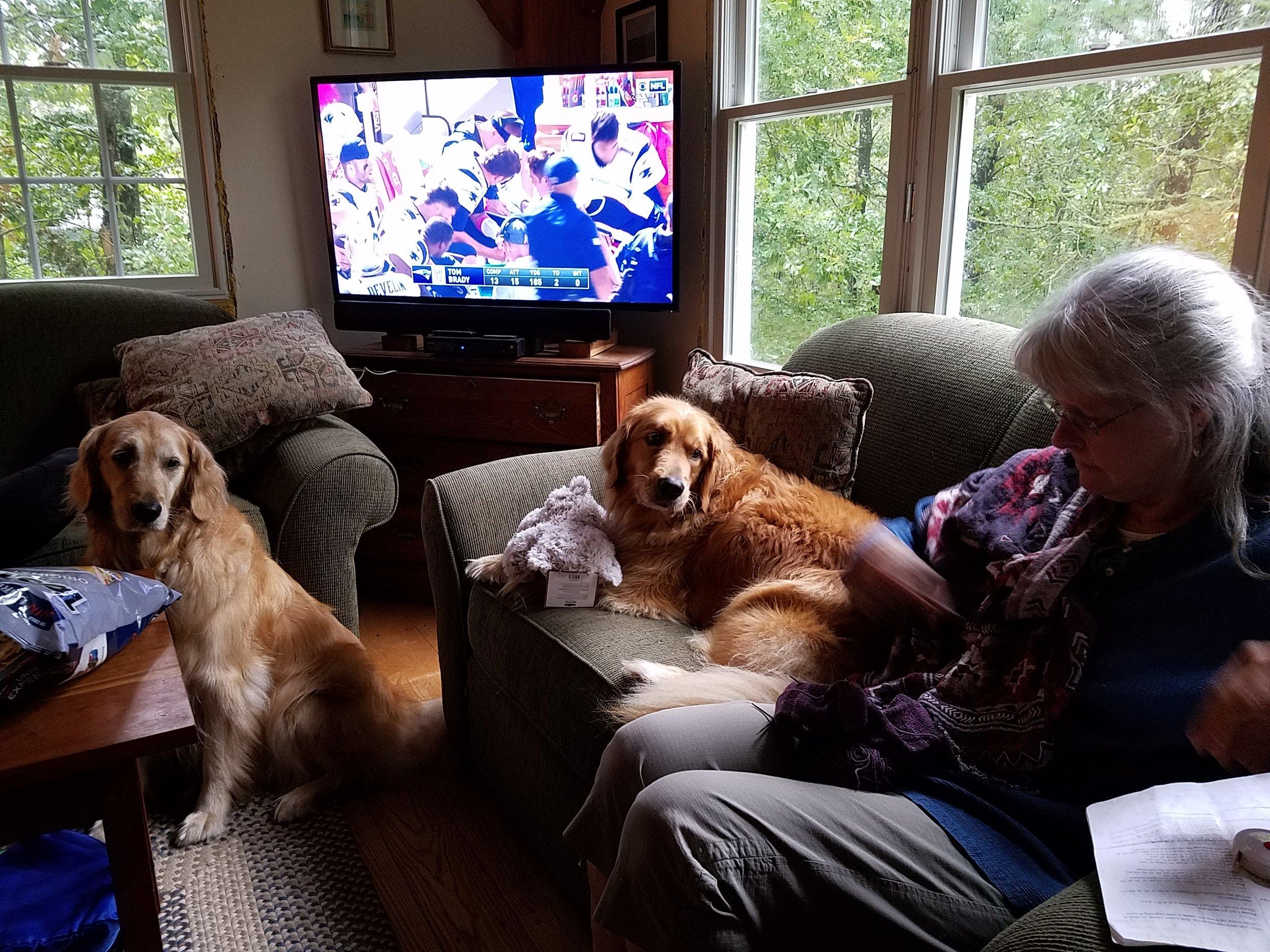 Sue Dogs Pats Oct 2016.jpg