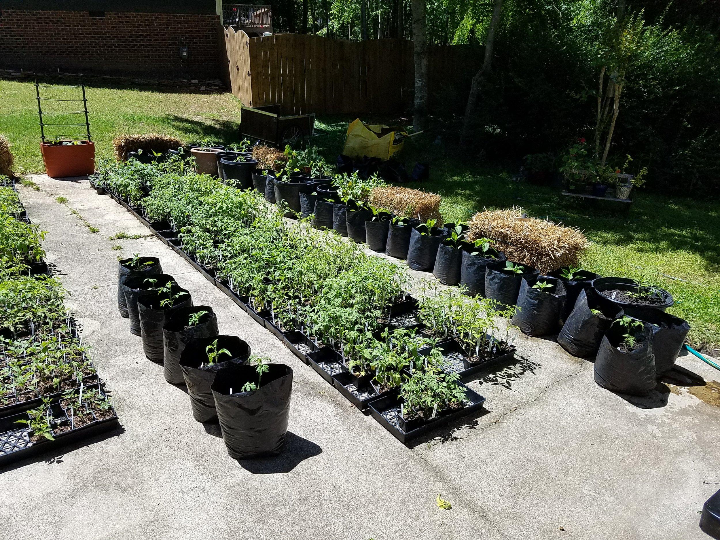 Driveway garden beginning to take shape