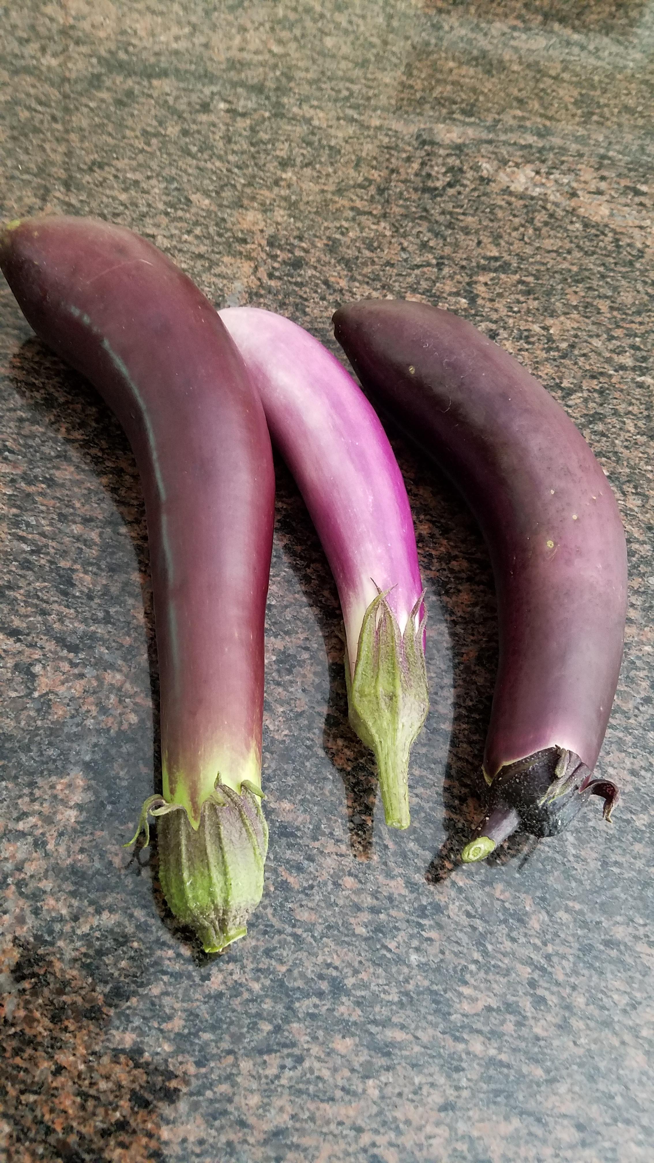 Eggplant compare July 18 2017.jpg