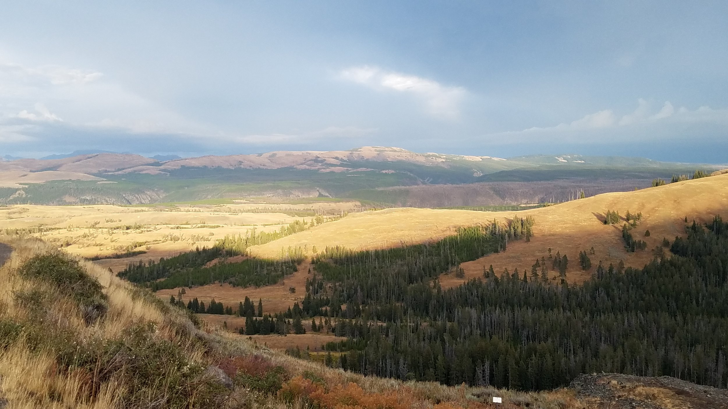 We found that the Cooke City home base allowed us to begin and end each day with a drive through our favorite part, the Lamar Valley.