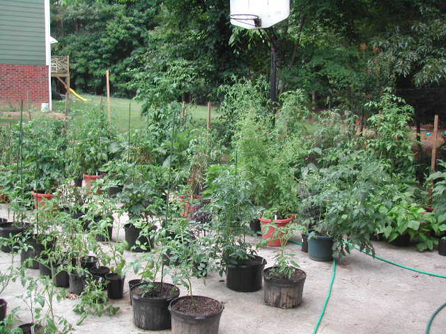 2004 late June view of the ever-increasing driveway garden