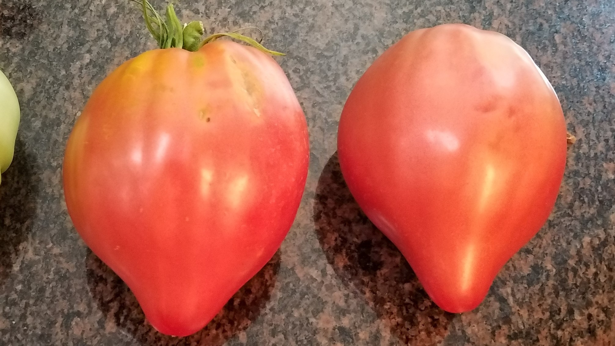 two perfect Cancelmo Family Heirloom tomatoes from my 2017 garden